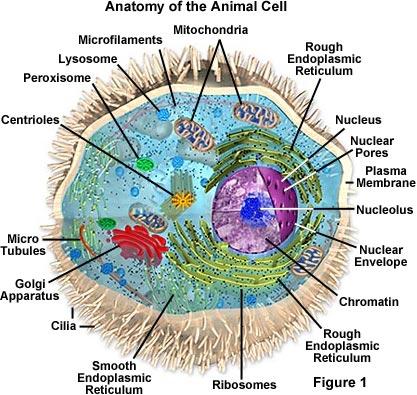 Eukaryotic Cell Biochemistry