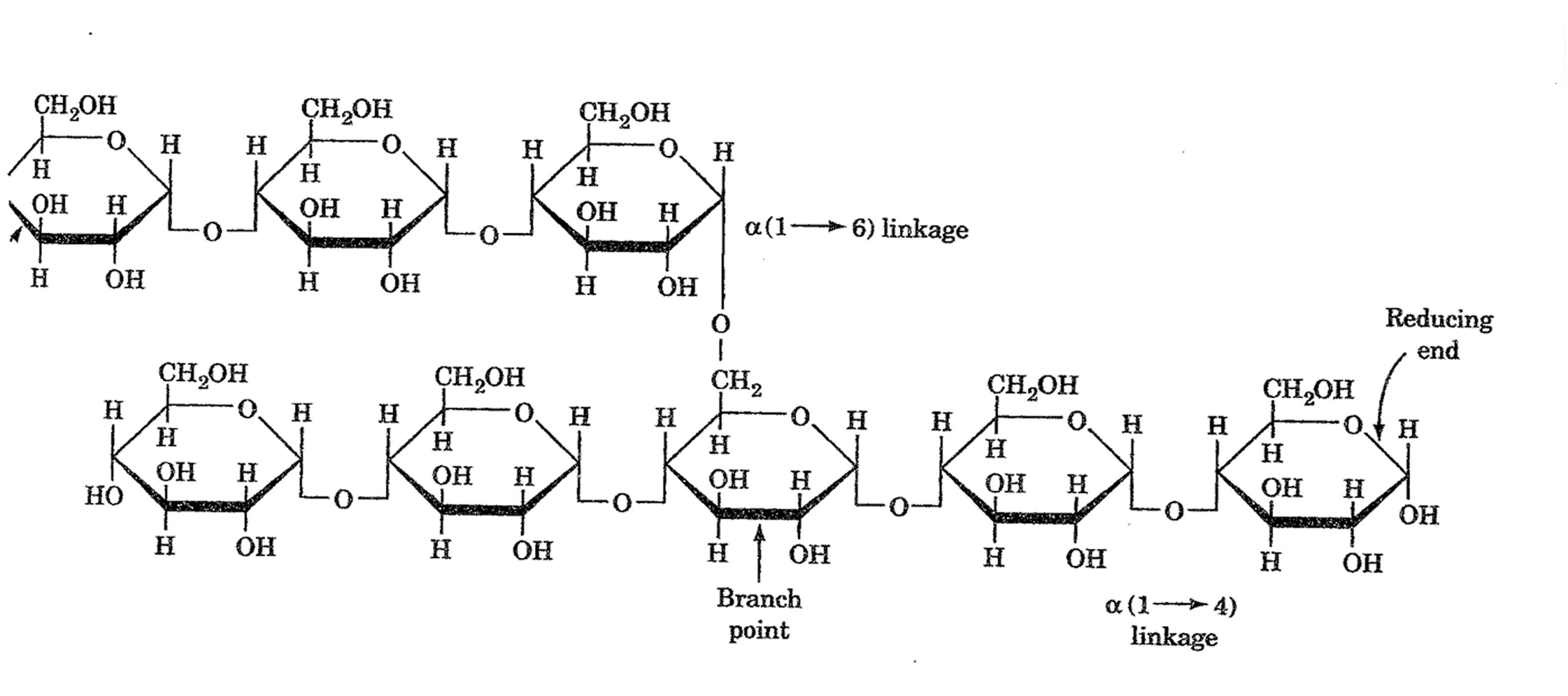 Glycogen | Biochemistry